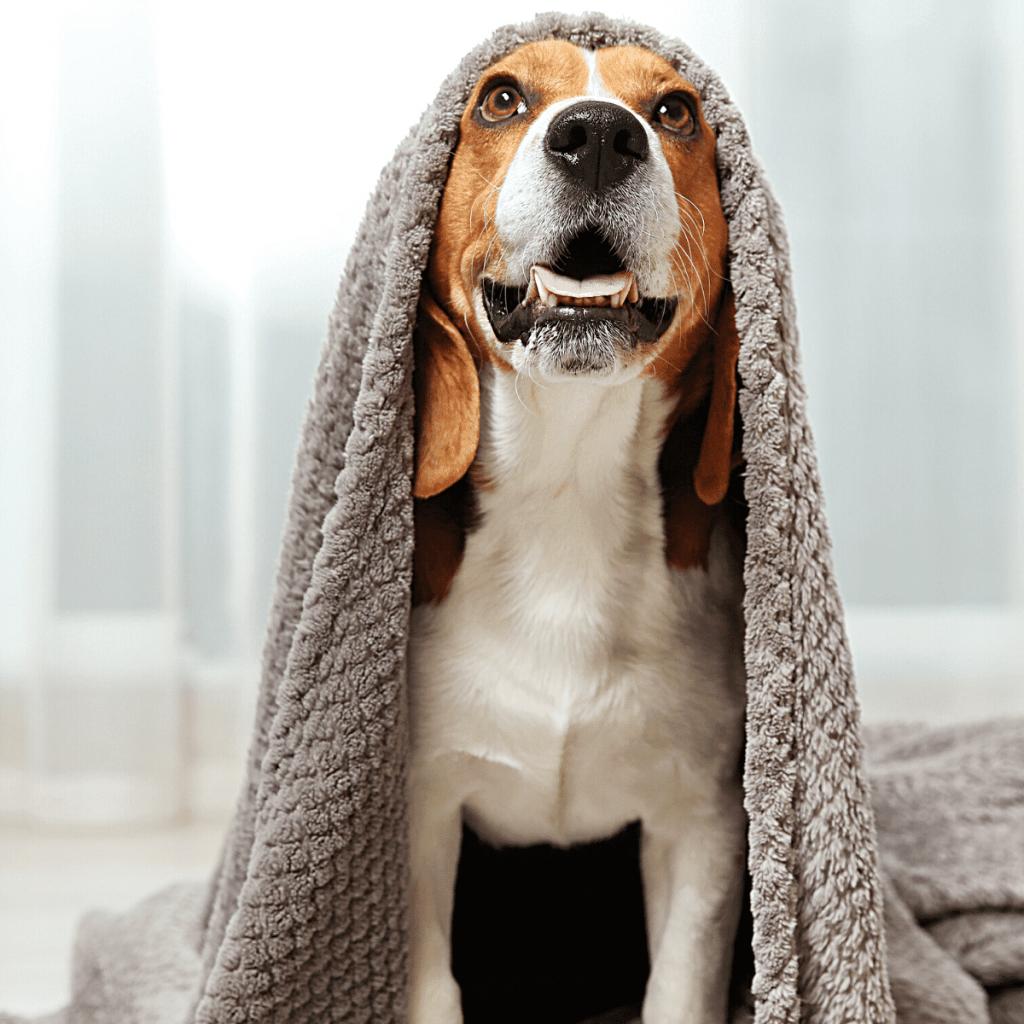 tappetini assorbenti cani